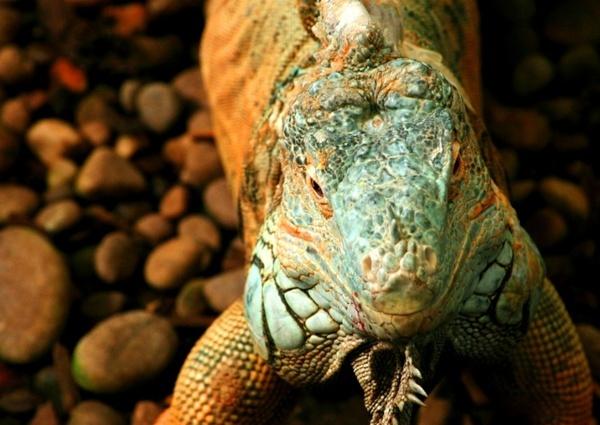 Lizardy Lizard by PeaceLily