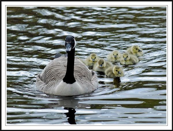 Proud-Mum by Steinmachine