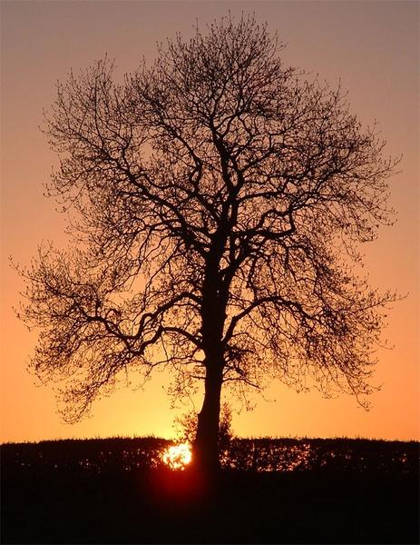 Mystical Tree by barn yard