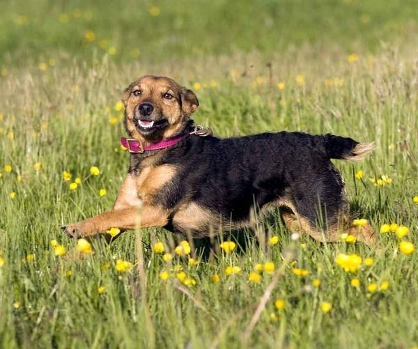 Running dog by neil john