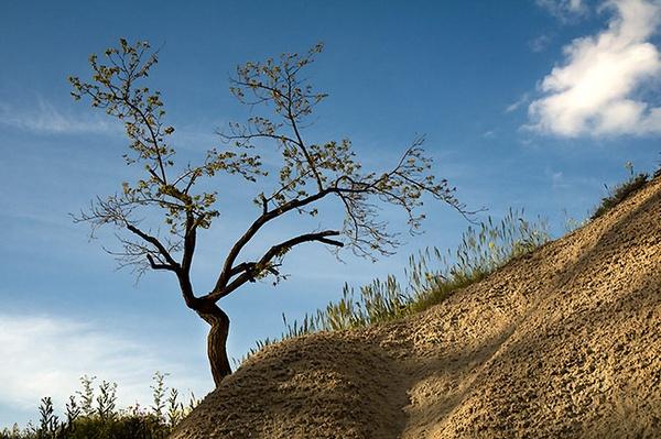 Cappadocian Odyssey by walterL