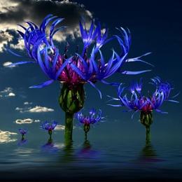 Flower Worlds_05
