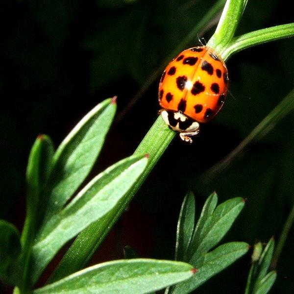Ladybird by crashby