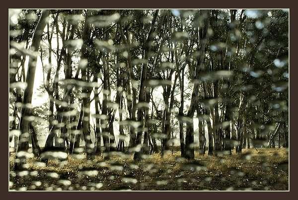 Rainy Day by Rogerex