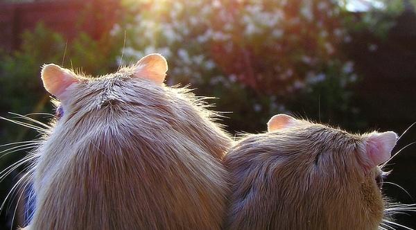 Little Friends by MissPea
