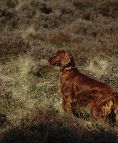 Looking for Grouse by DunDiggin
