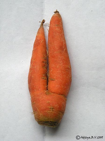 Joint carrot by moonboyindia