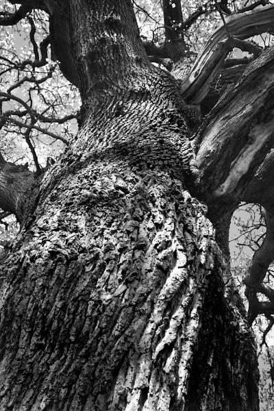 Tree Bark by BernieS