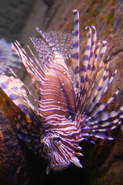 spiky fish by samknox