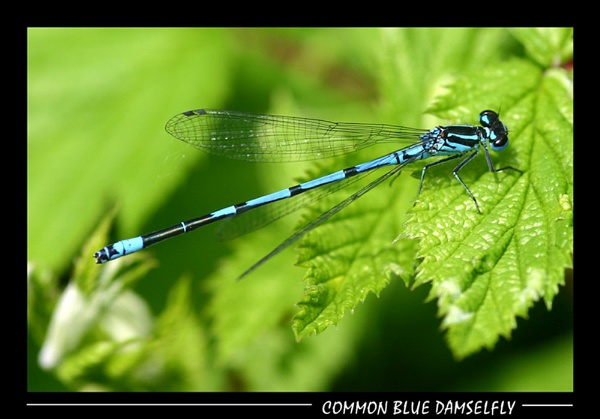 Damsel\'s not in Distress! by SteveMoulding