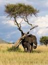 Scratching Tree