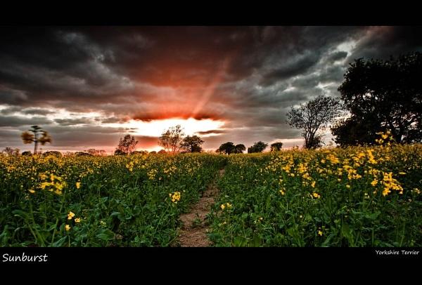Sunburst by Tandberg
