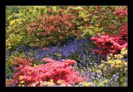 Himalayan Colours