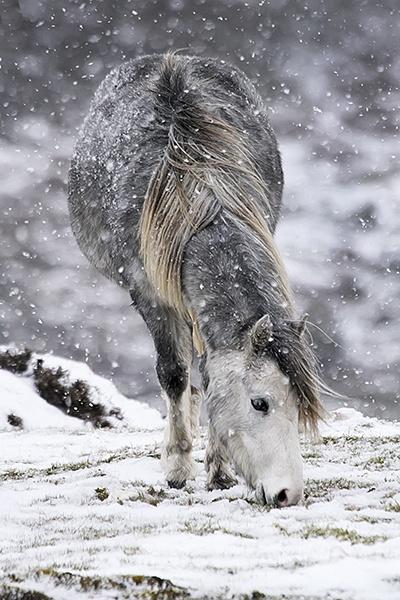Wild Pony by tywanda46