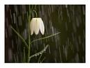 Rainy day & Monday