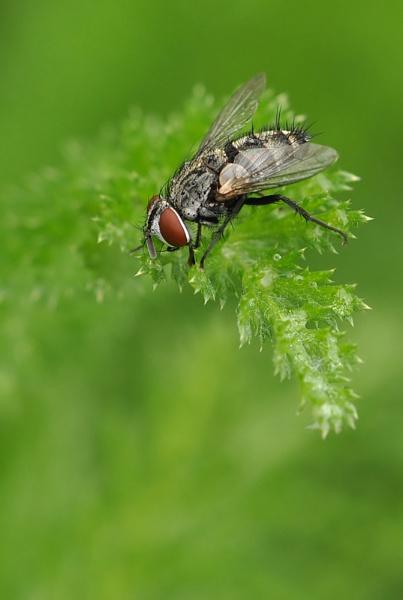 Fly by Rachelscott