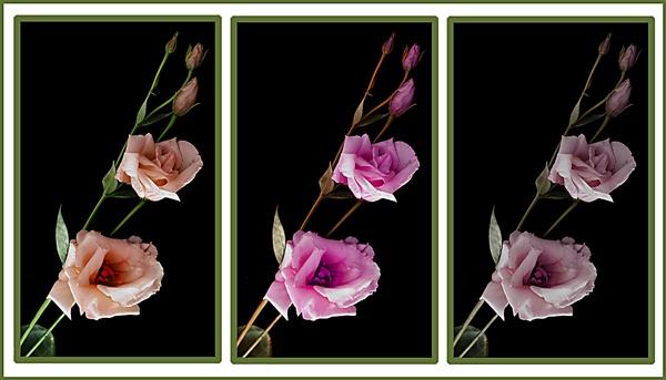 Lisianthus montage by Artois