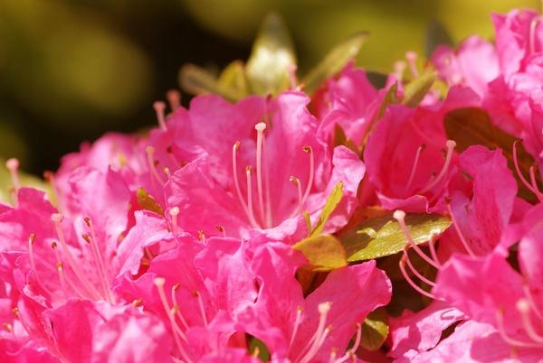 Pink by bpjohn
