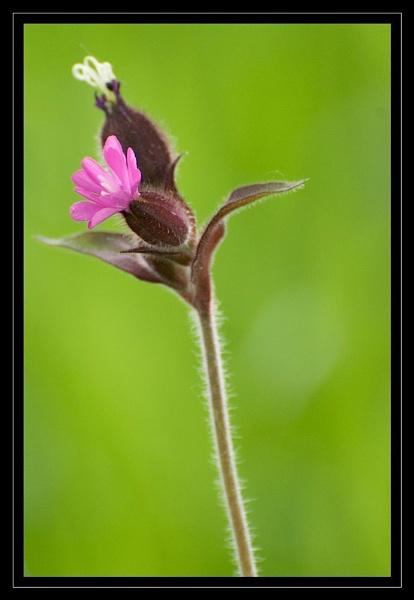 Flower by GaryR