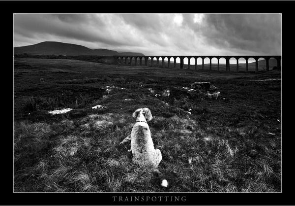 Trainspotting by jeanie