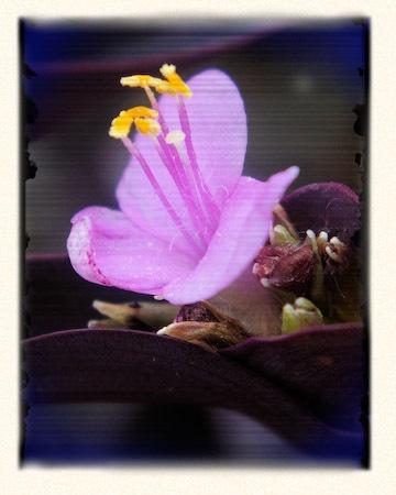 Purple Heart by TimothyDMorton