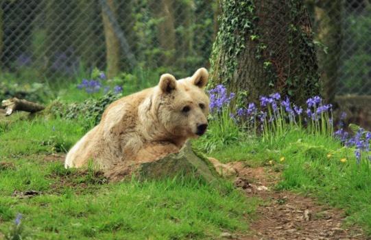 Teddy Bear by DaveCole