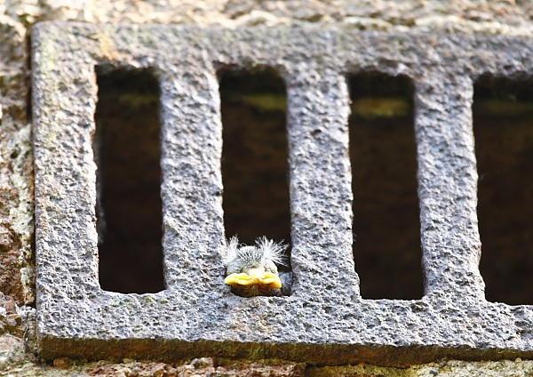 Jail Bird ? by Martin_R