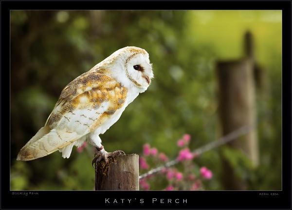 Katy\'s Perch by sherlob