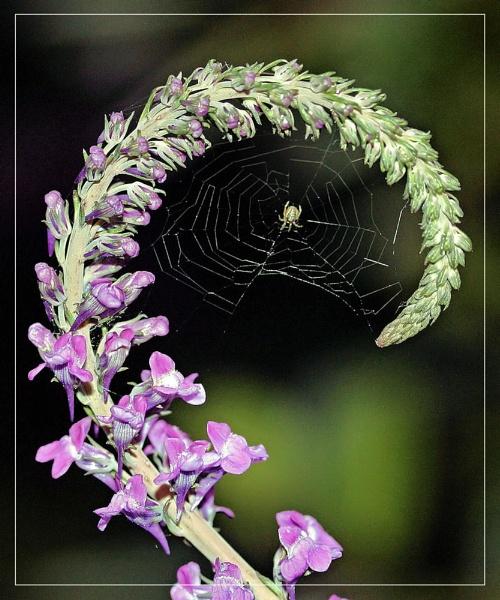 Spider\'s Crook by kraziteach