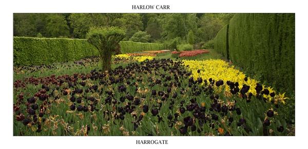 Harlow Carr by elaronndy