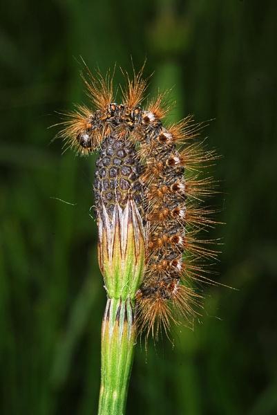 Caterpillar. by fishing