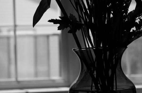 Vase by mrcran