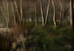 loch ard shore