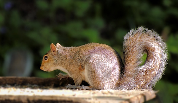 Whos nicked me nuts!! by Kenfromsot