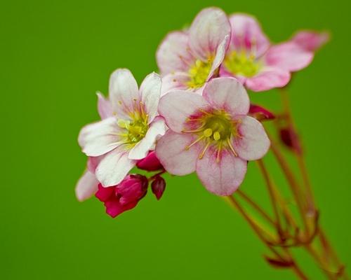 The Beauty in the Garden by LeonSLR