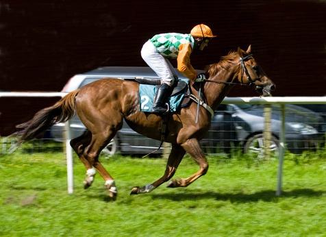 Galloping!! by docfarhan