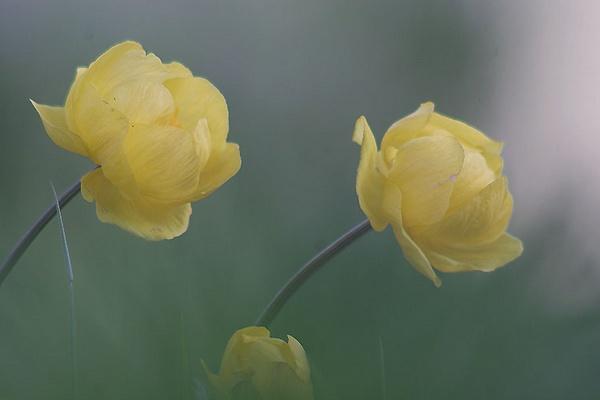 flowers by maratsuikka