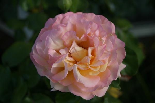 Flower by ablast