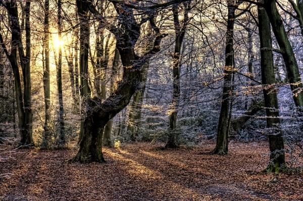 Winter Sun by fourdavisons