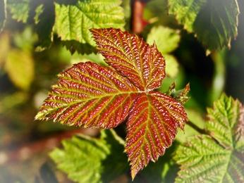 New Leaf by HelenHiggs