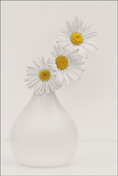 daisys 2 by jacquienewsham