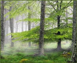 Soft Mist