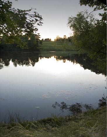 Pond Side Reflection by PeelNStick