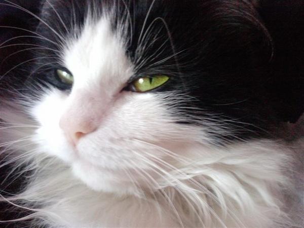my cat by Rosie_cheeks