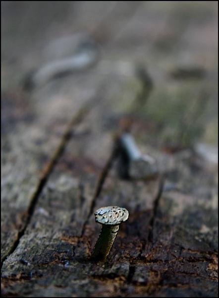 Wood & Steel by Mirjam