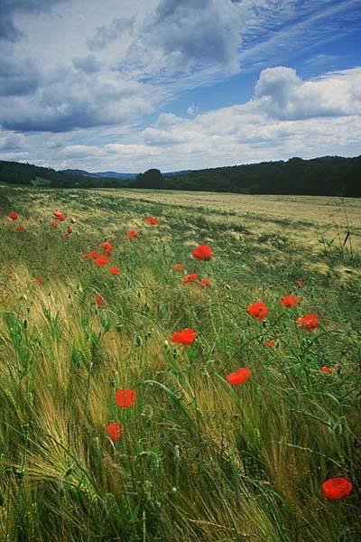 No herbicide please by WILDIMAGES