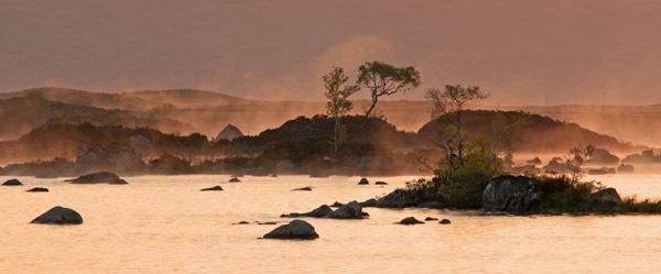 Rannoch Dawn Tree by RosePhoto