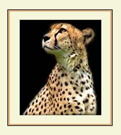 Cheetah Gaze by PeelNStick
