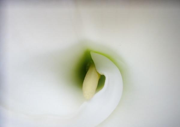 Lily? by LindaSJ