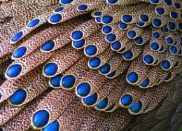 Feather Cascade